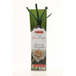 "Роза Queen of Margarita чайно-гибридная  (саж. ЗКС)  коробка ""RI"""