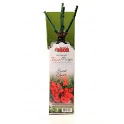 Роза Свит Кавер почвопокровная  (саж. ЗКС)  коробка