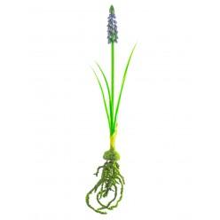 Цветок искусственный Мускари с луковицей №34.05