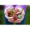 Каталог луковичных цветов: весна 2020