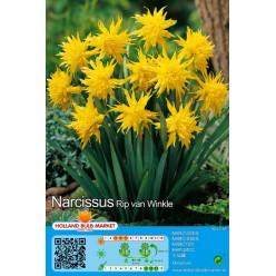 Нарцисс Rip van Winkle 5шт р.10/12 луковица 12269